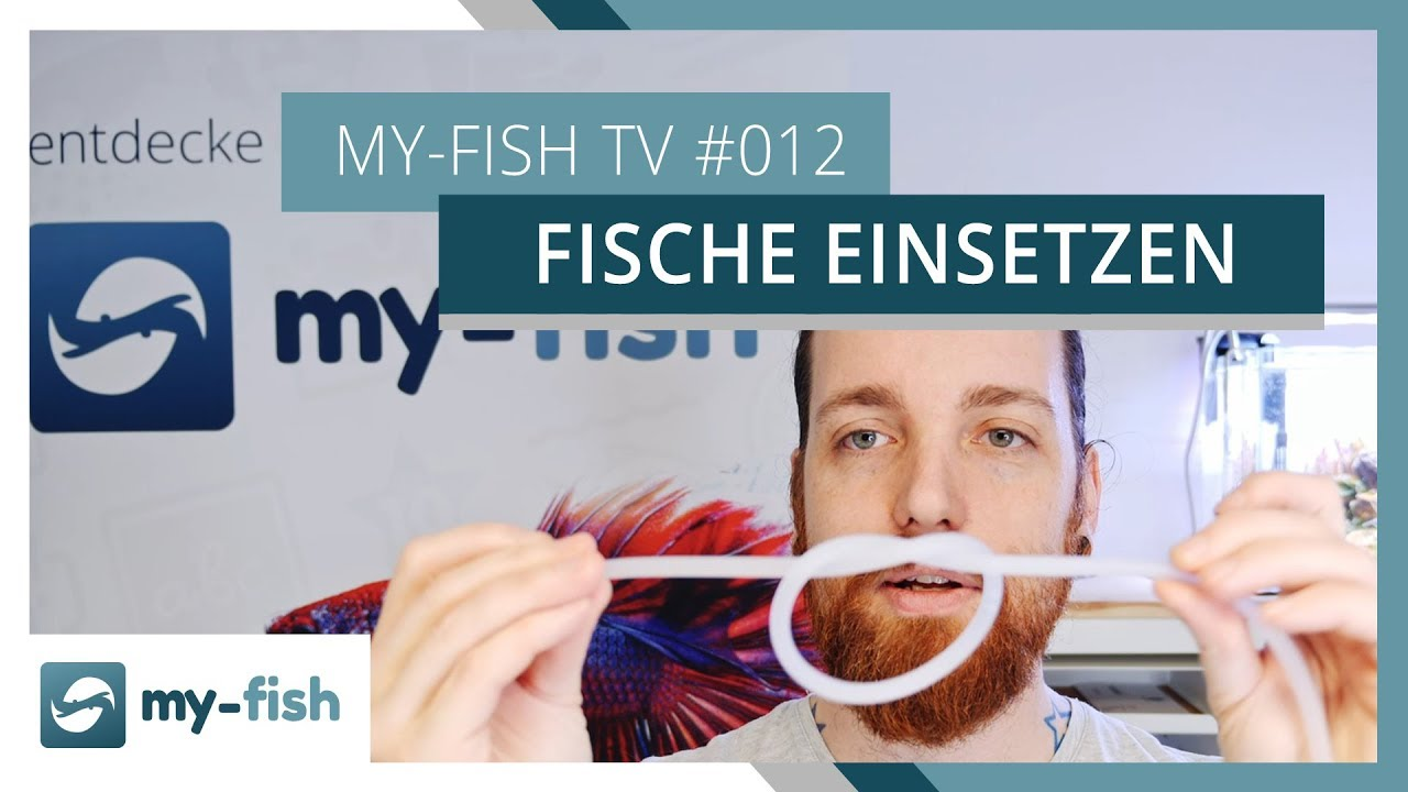 my-fish TV - Deine Nr. 1 Anlaufstelle für alle Themen rund um die Aquaristik 52