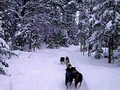 Dog Sledding to Winter Camp
