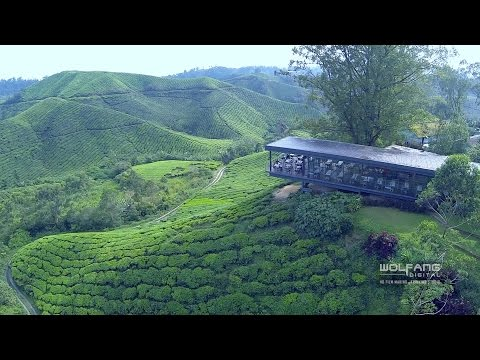 Tanah Rata Drone Video