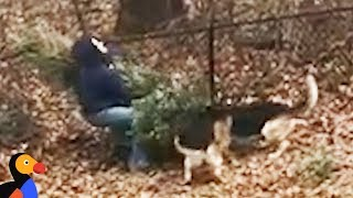 Dogs Don't Want Dad To Throw Away Christmas Tree  | The Dodo by The Dodo