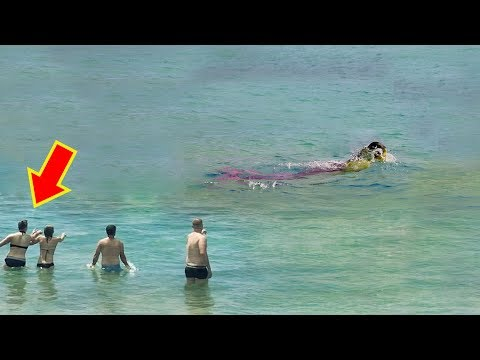 15 Real Life Mermaid Sightings From History