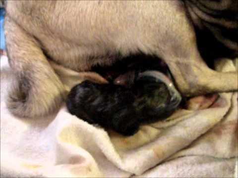 Sassy gives birth (warning: graphic material)