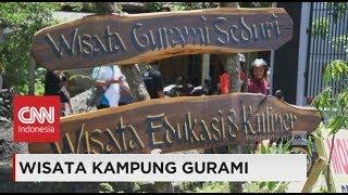 Video Wisata Kampung Gurami MP3, 3GP, MP4, WEBM, AVI, FLV Oktober 2018