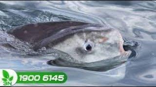 Thủy sản | Khắc phục cá bị thiếu Ôxy, đâm đầu vào bờ và chết