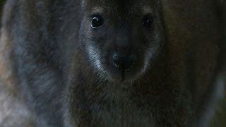 Rambouillet France  city pictures gallery : Les improbables kangourous de la fôret de Rambouillet