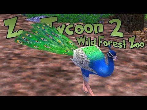 Pesky Peafowl Problems!! • World Zoo Season 3 - Episode #9