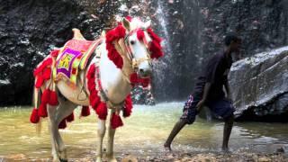 Ethiopian Music Instrumental, Dawit Yacob