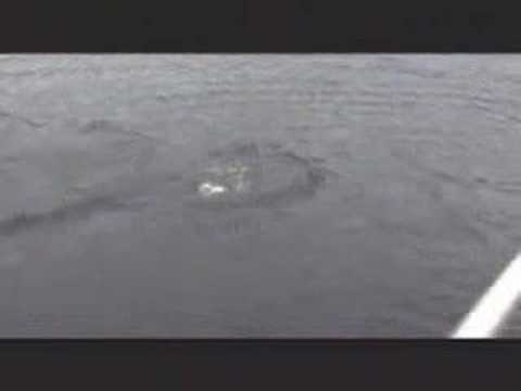 Amazing Loch Ness Monster Video