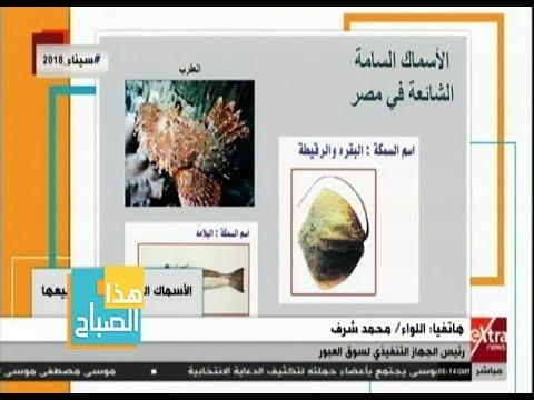 العرب اليوم - شاهد: قائمة الأسماك السامّة المحظور تداولها في مصر