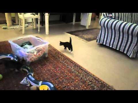 kitten lernen mal ein wohnzimmer kennen^^