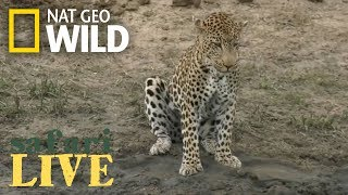 Safari Live - Day 106 | Nat Geo Wild by Nat Geo WILD