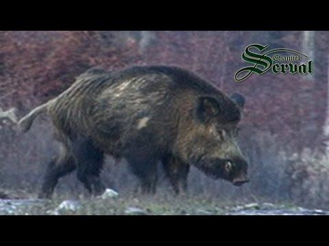 caccia al cinghiale in bulgaria