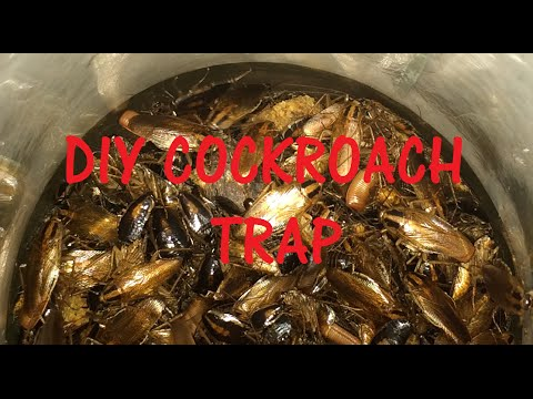 Diy Cockroach Trap With Proof