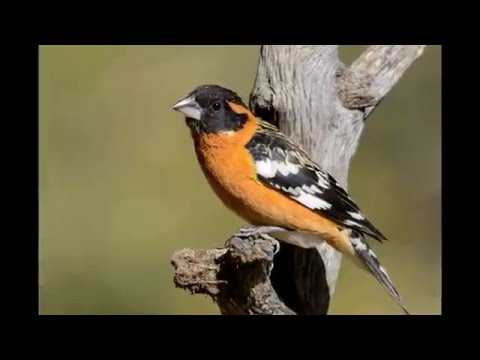 AZG&F – Arizona Birding Documentary