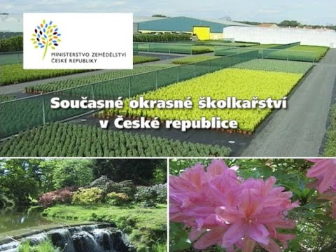 Současné okrasné školkařství vČeské republice