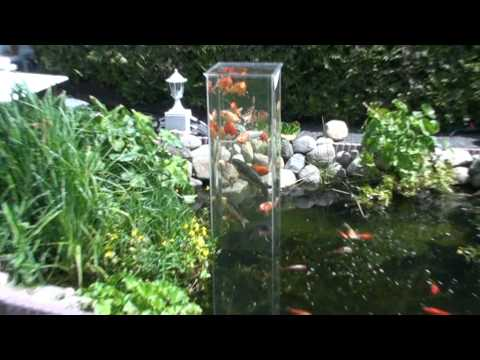 Koi observation tower for Cool koi ponds
