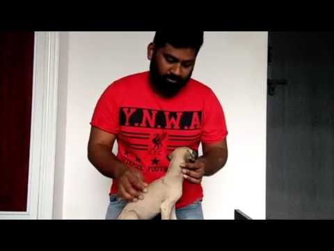 Video How To Select Kanni Puppy download in MP3, 3GP, MP4, WEBM, AVI, FLV January 2017