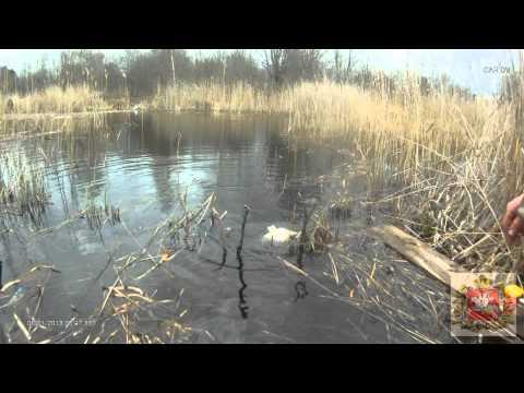 ловля весеннего карася на поплавочную удочку видео