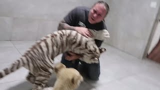 TIGER ATTACKS! CHOKED BY A SNAKE! MY LIFE!! TEN YEARS IN REVIEW!! | BRIAN BARCZYK by Brian Barczyk