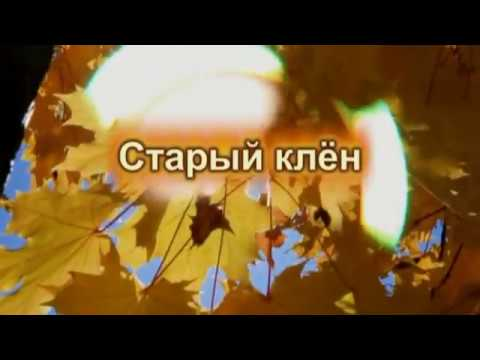 Старый клён (сл. Борис Родин/муз. Александр Лыгун)