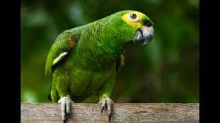 Família vai à Justiça para que idosa possa ficar com papagaio. Com informações do Fantástico.