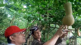 Video INDAHNYA BERBAGI PART 4 Tutorial Nature Stek Bunga dan Buah MP3, 3GP, MP4, WEBM, AVI, FLV Desember 2018