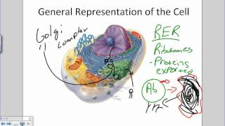 Cell And Organelles.wmv