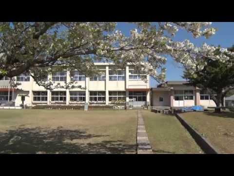 種子島のふるさと情報:古田小学校の桜が満開!
