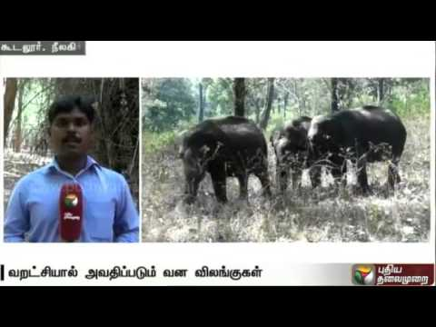 Wild-animals-forced-to-migrate-due-to-lack-of-water-at-Mudumalai-wild-life-sanctuary
