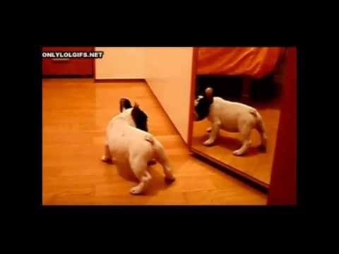 Video de perros y gatos graciosos – Funny dogs and cats