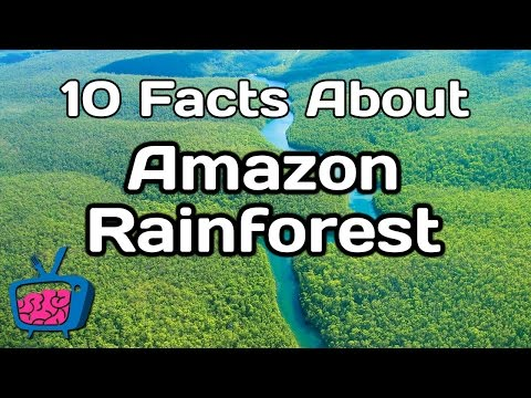10 Mind Blowing Facts About The Amazon Rainforest