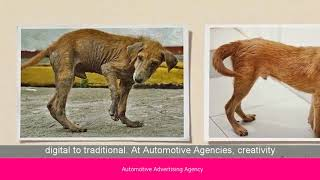 Looking for Automotive Advertising Agency The Automotive Advertising Agency theautoadagency.com/The Automotive ...