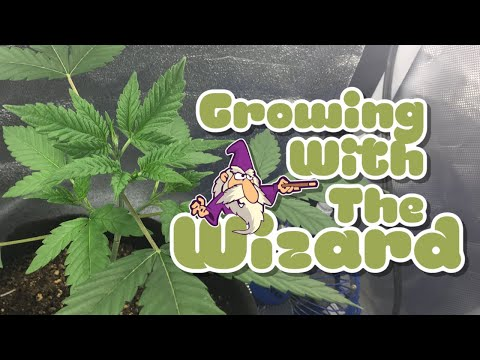 Growing With The Wizard - Grow 1 - Episode 27