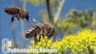 Video Top 10 Things That Would Happen if BEES DIED OUT MP3, 3GP, MP4, WEBM, AVI, FLV Mei 2019