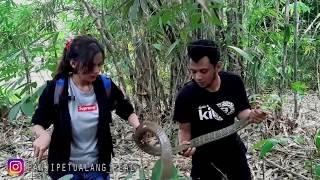 Video KING COBRA INI MARAH KARENA TELURNYA SAYA PEGANG!! MP3, 3GP, MP4, WEBM, AVI, FLV Desember 2018
