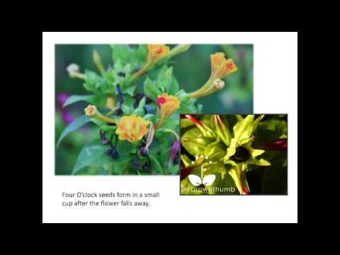 Saving Seeds from Flowers and Herbs – Ira Wallace at Seed Savers Exchange