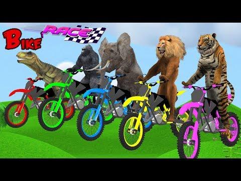 Animals Bike Race Wild Animals Animation Cartoon For Kids | Running Race Video For Children