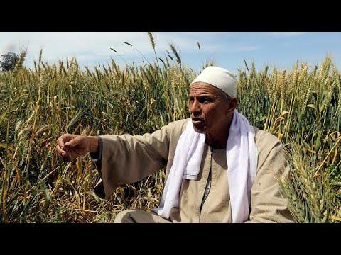 العرب اليوم - مزارعون مصريون يواجهون مصيرًا مجهولًا