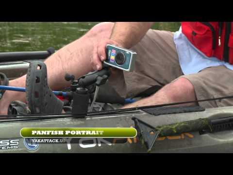 Panfish Portrait