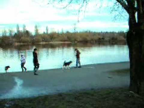 Trout Lake - Vancouver Dog Park Review