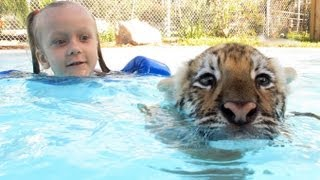 Swimming With Tiger Cubs full download video download mp3 download music download