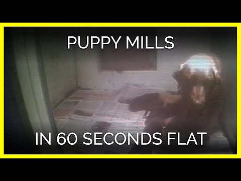 Watch: Video Exposes the Cruelty of Puppy Mills