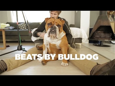 WATCH - Bulldog is a beat drum