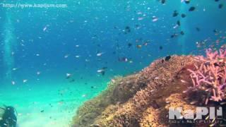 【沖縄】国立公園に指定された慶良間諸島の海が美しすぎる