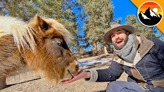 How to Take Care of a MINIATURE PONY! by Brave Wilderness