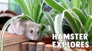Nitrogen The Hamster Explores His New Home! by ErinsAnimals