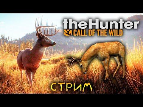 ПРОДОЛЖАЕМ ОХОТУ НА ОЛЕНЕЙ - The Hunter: Call of the Wild (стрим) #2 (видео)