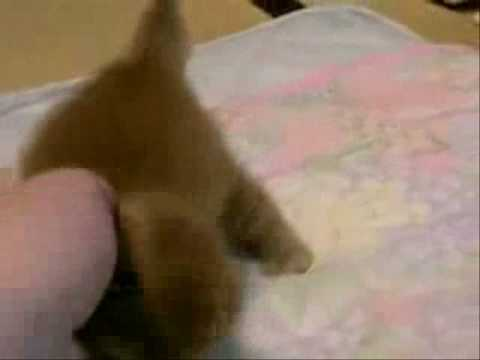 Funny Cats – Small And Cute – iklan.7veo.com