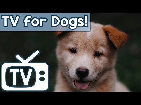 Video Calm Your Dog TV - TV for Stressed Dogs! Nature Footage with soothing Music  (Separation anxiety) download in MP3, 3GP, MP4, WEBM, AVI, FLV January 2017