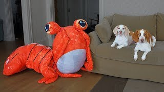 Dogs vs Giant Shrimp Prank! Funny Dogs Maymo & Potpie by Maymo